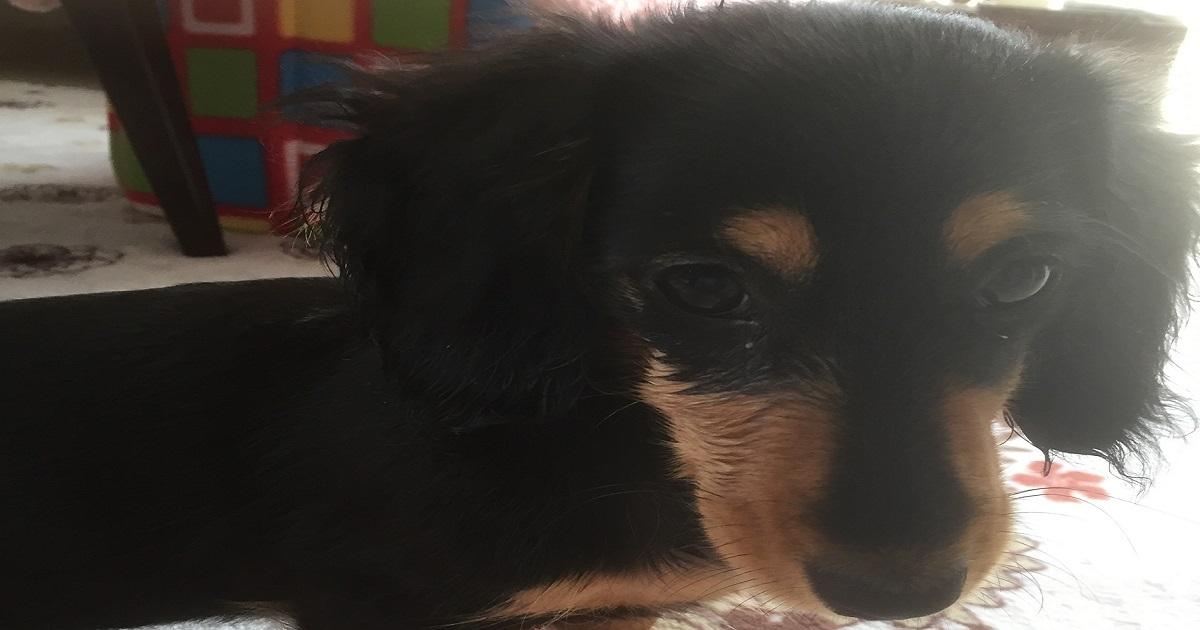 愛犬の紹介