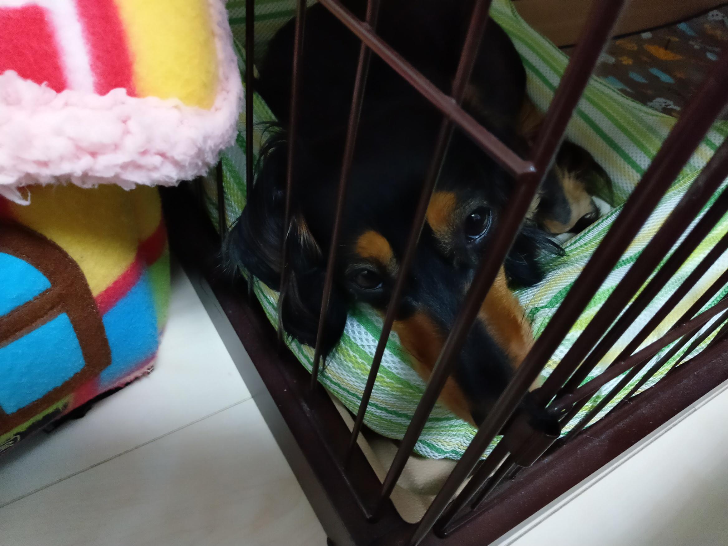 眠りにつく愛犬