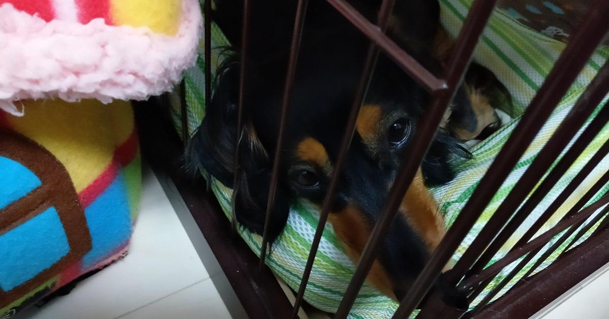 小屋で眠る愛犬