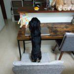 三代目イカくんと遊ぶ愛犬の六花