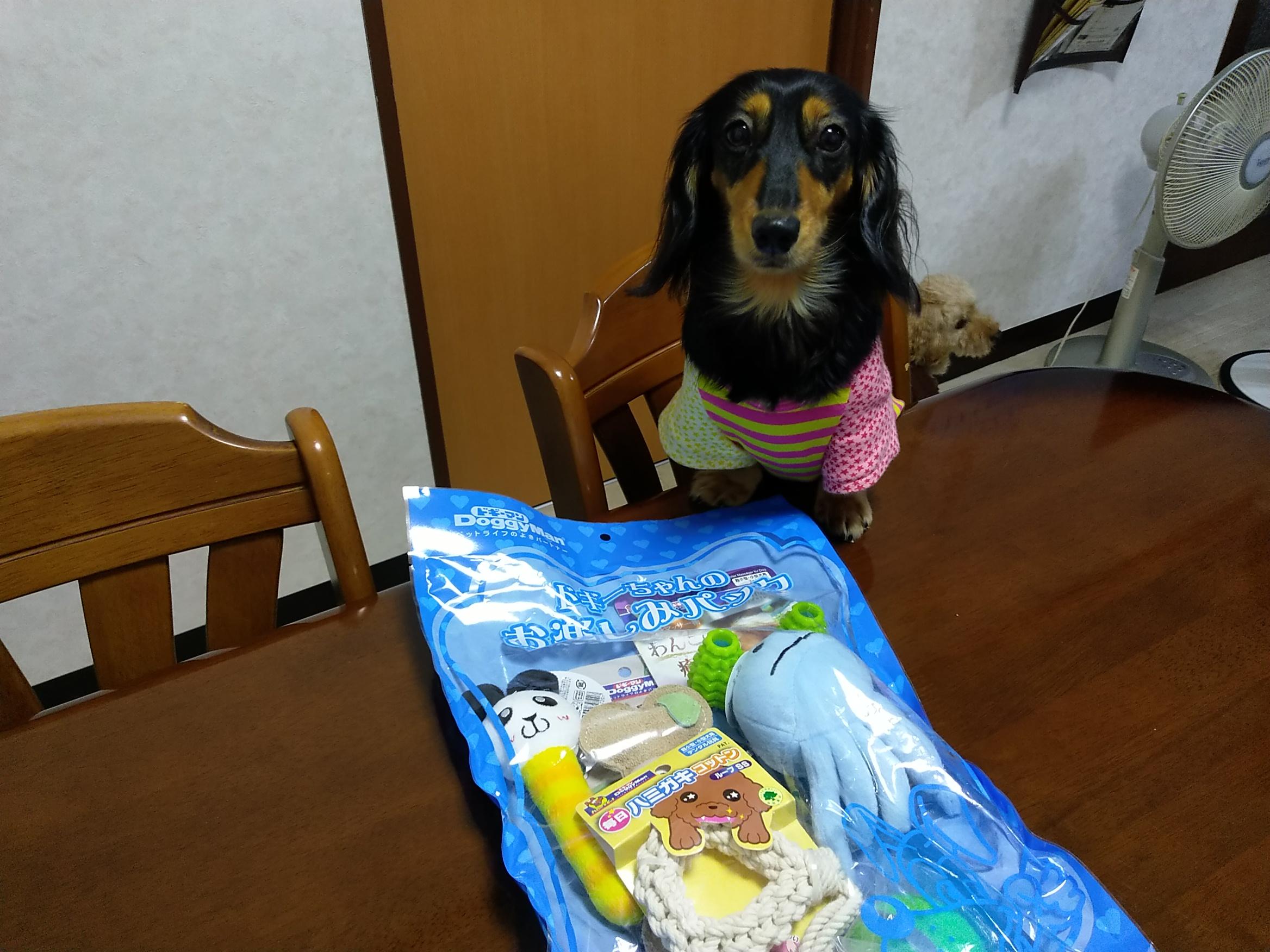 愛犬と誕生日プレゼント