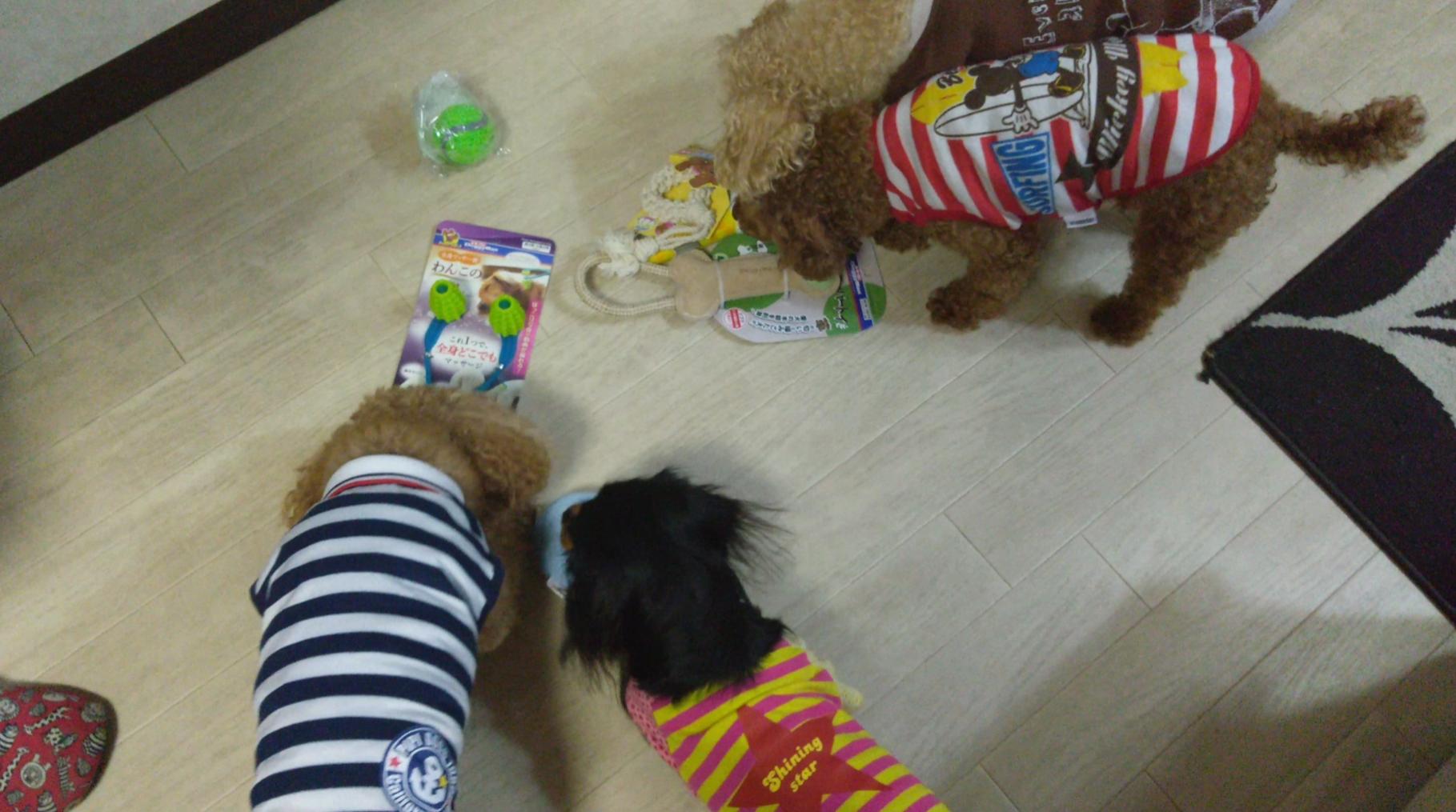 愛犬の誕生プレゼントに群がる仲間たち