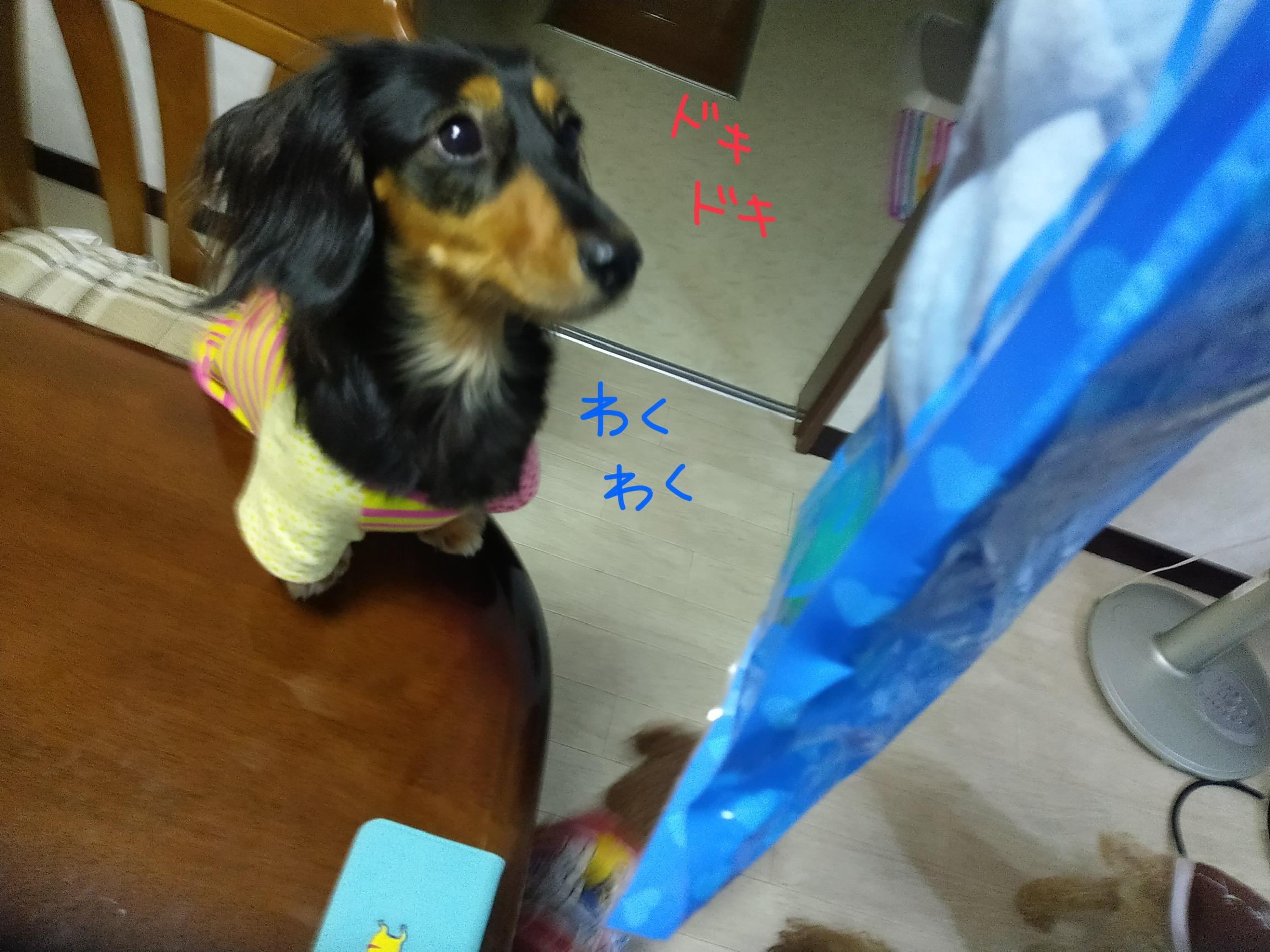 愛犬が誕生日プレゼントの中身を気にしている