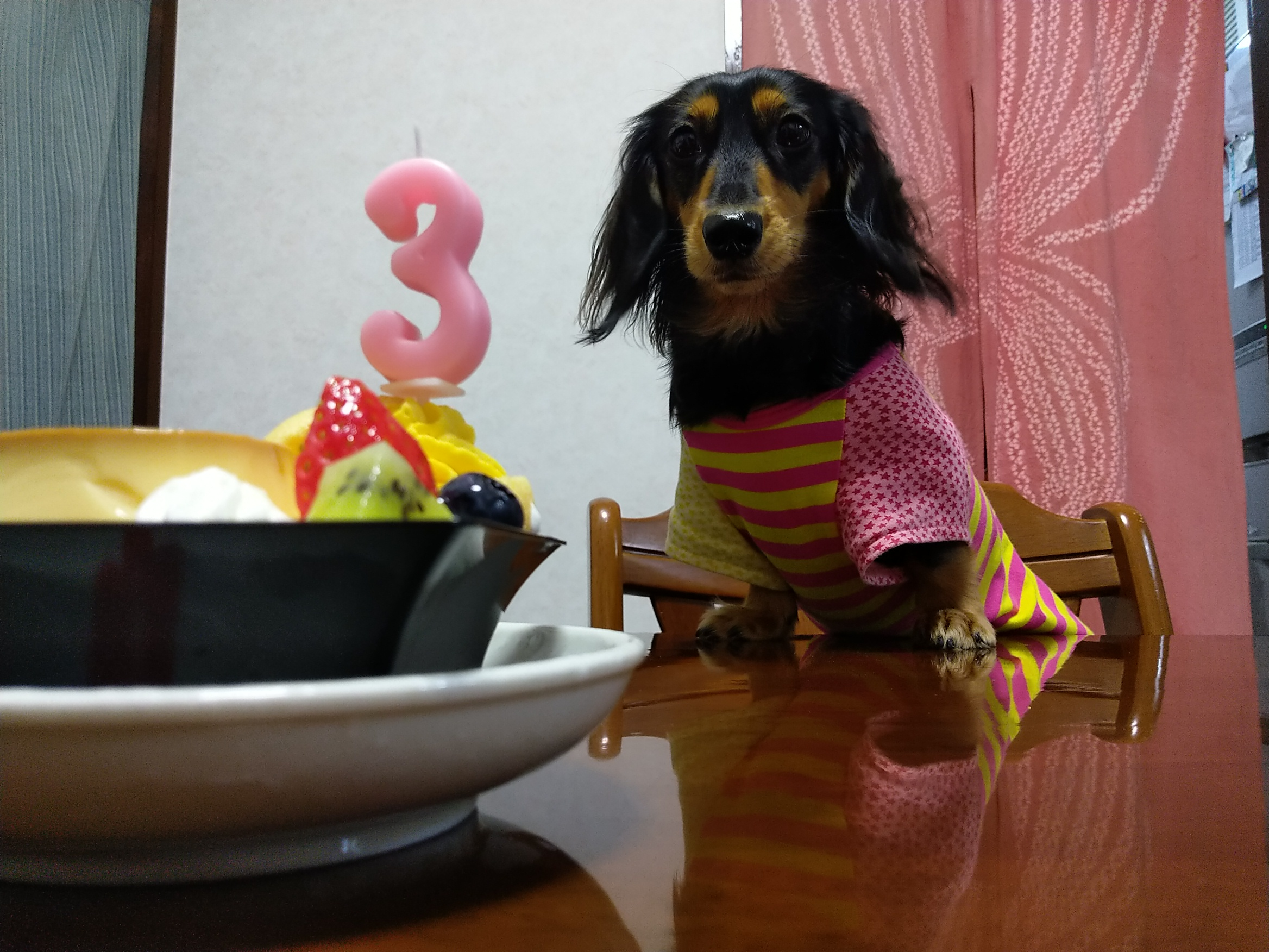 ケーキをもらえるかと思った愛犬