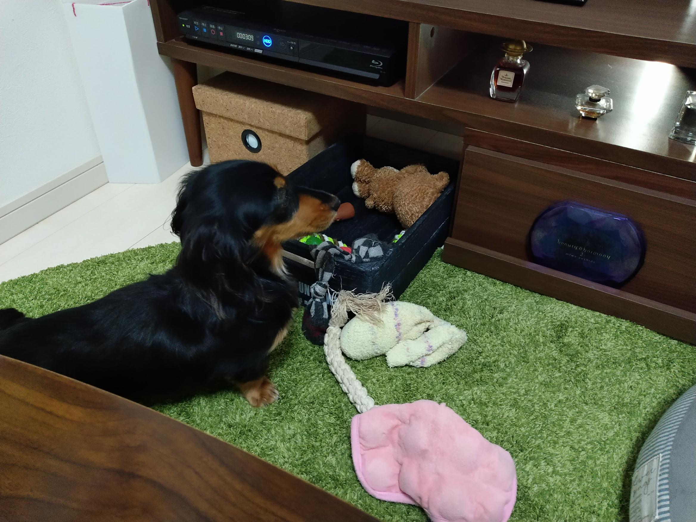 おもちゃに異変を感じる愛犬
